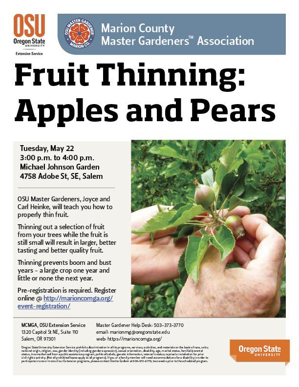 Fruit Thinning - Apples and Pears @ Michael Johnson Garden | Salem | Oregon | United States