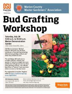 Bud Grafting @ Marion Demonstration Garden   Salem   Oregon   United States