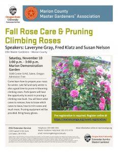 Fall Rose Care & Pruning Climbing Roses @ Marion Demonstration Garden