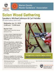 Scion Wood Gathering @ Bauman Farm